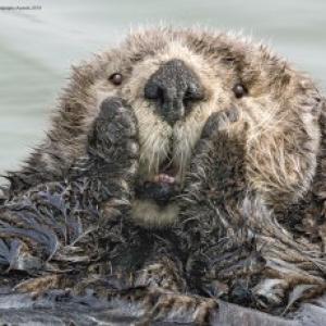 動物たちの笑える瞬間を撮影しました 「野生動物ユーモア写真大賞(The Comedy Wildlife Photography Awards)」