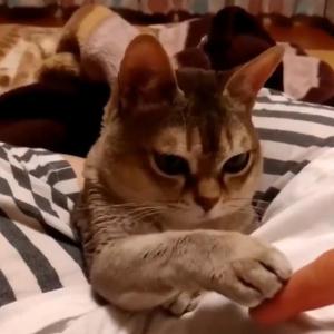"""猫と""""どっちが指を上に乗せるか選手権""""をする動画がネットで反響「永遠に見てられる」"""