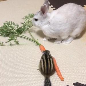 うさぎとリスで人参を食べていた結果→「下僕は人参の葉っぱしか食べることを許されません」