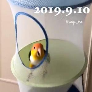 小鳥が「ぴょこぴょこ」歓喜する動画が話題に「トランポリンしているみたい」