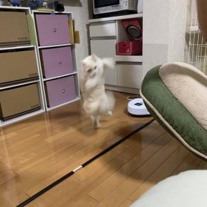猫が強そうな猫パンチを繰り出す姿が話題に「世界を獲れる左」