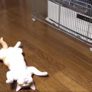 猫が人生初のストーブでメロメロになる動画に「これはとても良い干物ですね」「完全無防備」の声