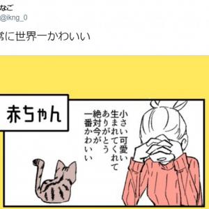 赤ちゃんから老猫まで「常に世界一かわいい」 猫の魅力を描いた4コマ漫画が大人気