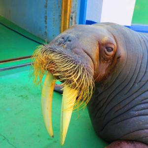 """""""高知県立のいち動物公園""""と""""沖縄美ら海水族館""""が1位に 口コミで人気の日本の動物園・水族館ランキングをトリップアドバイザーが発表"""