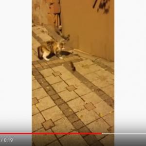 """動画:""""窮鼠猫を噛む""""ってホントなんだね"""