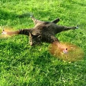 死んだ猫をヘリコプターに改造! 「猫は鳥が好きだったからヘリにした(食べ物的な意味で)」
