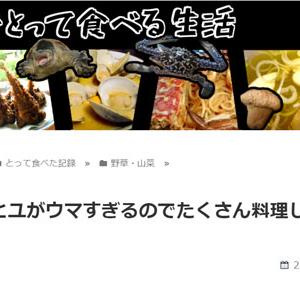 スベリヒユがウマすぎるのでたくさん料理してみた(東京でとって食べる生活)
