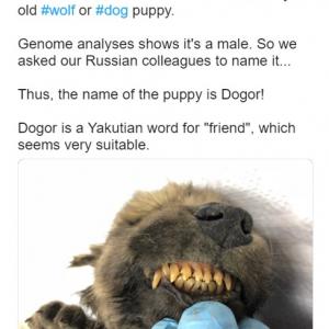 犬なのか狼なのか正体不明です 1万8000年前の動物の死体