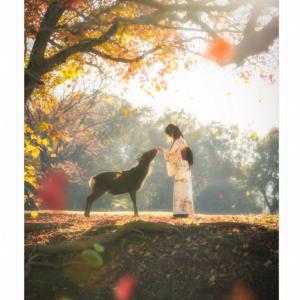 「奈良の鹿はほんと心得てる」 物語のワンシーンのようにロマンティックな画像が話題に