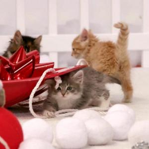 """『アニマルプラネット』の""""赤ちゃん動物""""特番は日本でも放送して欲しい アメリカではクリスマスの放送予定"""