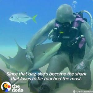 刺さった釣り針を取ってあげたら、こんなに仲良しになった! サメとダイバーの絆にほっこり
