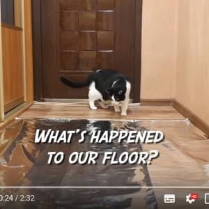 ネコはアルミホイルが嫌いと良く聞くけど 本当かどうか検証してみた