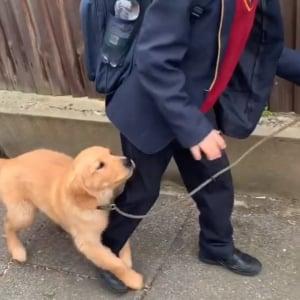 「学校に行かないで!」少年にしがみつくレトリバーの子犬がかわいい