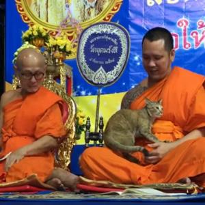 「ナデナデしてニャ~」 タイの仏教寺院に珍客が乱入!