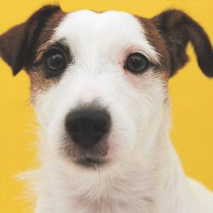 愛犬といつまでも健康に。犬の立場から考えた健康書『犬のための家庭の医学』