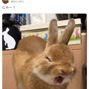 うさぎってこんなに表情豊かなんだ……「にゃー!」とあくびする姿がTwitterで大人気に