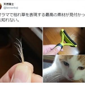 「ジオラマで枯れ草を表現する最高の素材」!? 猫毛の意外な使い道に注目集まる