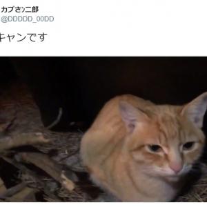 オトモアイルーかな? 猫だらけのソロキャン動画が羨ましすぎ 「全然ソロじゃないw」の声