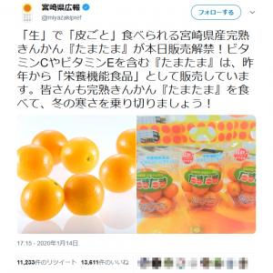 宮崎県広報「『生』で『皮ごと』食べられる宮崎県産完熟きんかん『たまたま』が本日販売解禁!」ツイートが話題に