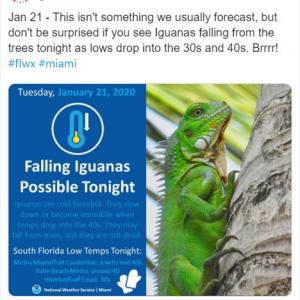 冷え込みでイグアナが降ってくるかも!? マイアミで異例の天気予報