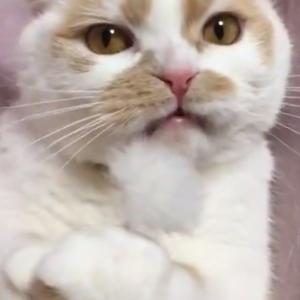 猫が自分で舐め回した耳かきを嗅いだ結果→「おや?っていう表情」「なんじゃこりゃホイ」