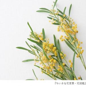 花言葉で「愛」を伝える! 春のイベントで贈りたい花6選とその花言葉