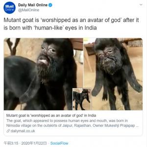 """インドで誕生した""""人面ヤギ"""" 地元住民は神様の化身として崇拝"""
