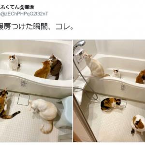 これが噂のニャン盤浴!? お風呂に大集合するニャンズが可愛すぎて癒やし効果抜群