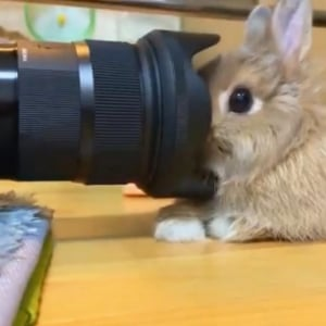 ウサギがカメラに慣れすぎた結果→「どんなに近づけても逃げなくなりました」「一眼レフに食べられる」