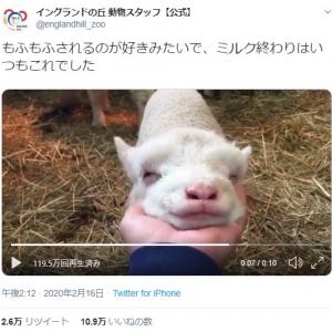 """羊のアゴを""""モフモフ""""した結果→「溶けてる」「ファルコンみたい」"""