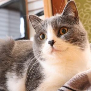「約200語を覚えられる」人間があまり知らない猫の知能