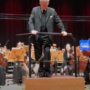 オーケストラコンサートに野良猫が乱入! そのとき指揮者は……