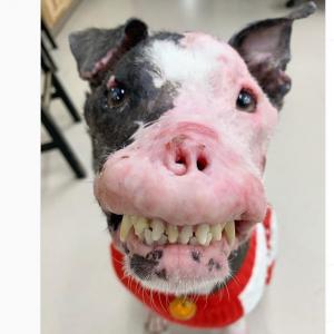 ゾンビ犬みたいな見た目だけど普通の犬でございます 『バイオハザード』に出演した経歴もございません