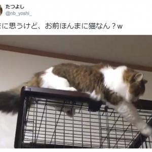 そろりそろり…… 慎重派の猫がTwitterで大人気 「親近感」「背中にチャックついてない?」の声