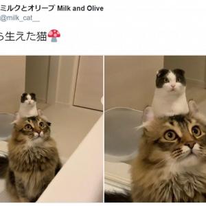 猫から猫が生えてる!? 奇跡のショットに猫好き歓喜 「パイルダーオン!」「思わず三度見した」との声
