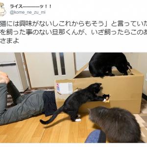 「猫には興味がない」と言っていた旦那がいざ猫を飼ってみたら……もうメロメロ!
