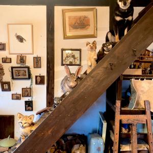 黒い柴犬と木彫りの動物たちが並ぶ階段 ツイート投稿が話題に「おとぎの国の様です」「本物ど~れだ?」