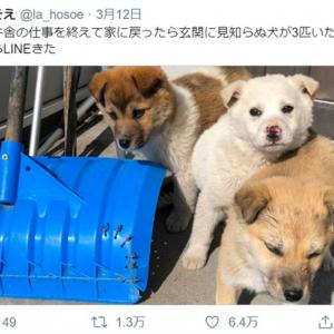 母「玄関に見知らぬ犬が3匹いた」 ほっこりエピソードがTwitterで話題に 「これも何かの縁」