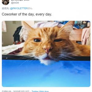 ペットと一緒の在宅勤務はなかなかに大変そうです 「本日の同僚。てか、毎日」