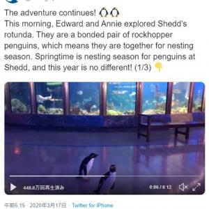 新型コロナウイルスで閉鎖になって人間が来なくなったからね 普段は見られる側のペンギンが見る側に