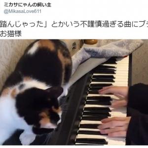『猫ふんじゃった』にブチギレる猫がTwitterで大人気 「全猫を代表しての全力の抗議ですね」