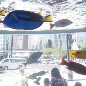 沖縄の海からハイサイー! 『45th Sony Aquarium』で海の生物を学んできたよ!