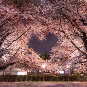 夜桜の中に浮かぶハートのシルエット!春の訪れを感じさせる神秘的な写真が話題に