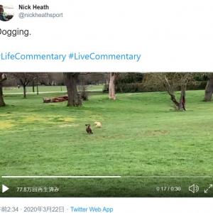 ただ犬が追いかけっこしてるだけなんだけど…… スポーツ専門のアナウンサーが実況するとこうなります