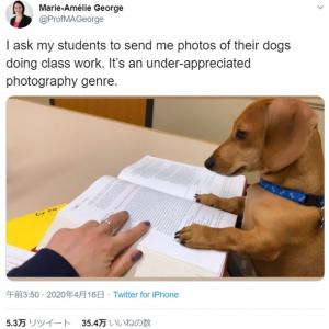 授業を受けている愛犬の写真を送って 教授の無茶振りに多くの反応が集まる