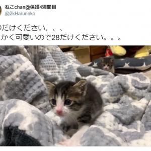 「28秒だけください」 よちよち歩く子猫の動画にTwitter民悶絶 「もっと見たい」「28分でもいい」との声
