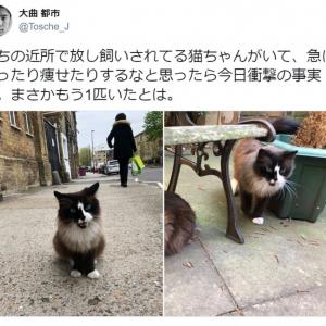 太ったり痩せたりする不思議な猫に衝撃の事実! 「双子トリックかよ」「ドッペルゲンニャー」とTwitterで反響