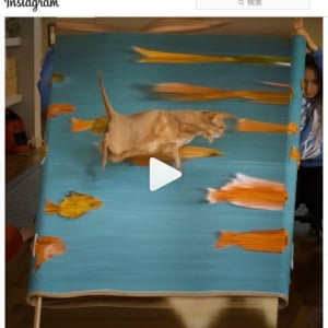 ちょっとキモいんだけどクセになりそうな猫の動画 「どれでもいいからこういう猫一匹欲しいよ」