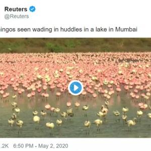 フラミンゴに占拠されたインドのムンバイ 「動物たちにとっては人間がウイルスみたいなもんだ」