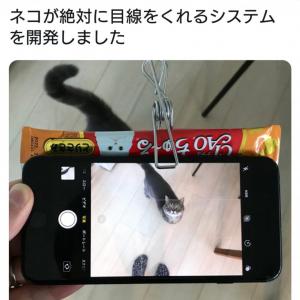 「猫撮技術のブレイクスルーが起きてしまった」 ネコが絶対に目線をくれる画期的システムが話題に
